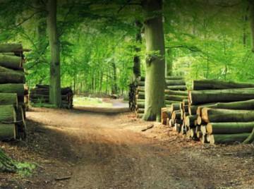 Med erhvervelsen af Gørslev Skovindustri er Sorø Akademi blevet kvalitetsleverandør af kløvet og ovntørret brænde. Foto: Gørslev Skovindustri Brænde fra Gørslev Skovindsurti