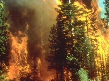 skovbrand