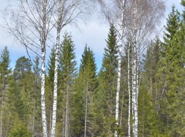 Parasit i skovene