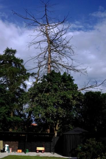 Er udgået træ farligt?