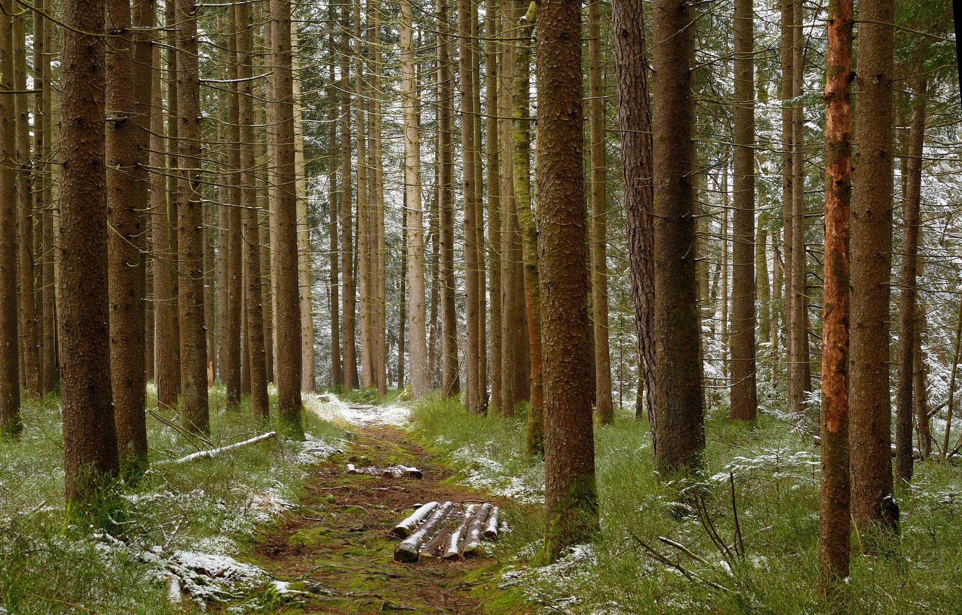 Lignin udgør op til 35 % af træs kemiske bestanddele. Lignin er makromolekyle der gør træ hårdt og som yder træerne beskyttelse mod angreb fra svampe, bakterier og vira.