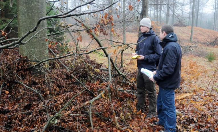 Skov- og landskabsingeniør