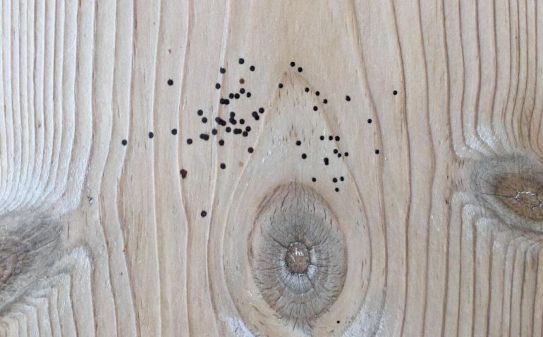 fluelort på gulv trægulv