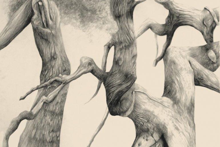 Egetræ på Knudshoved