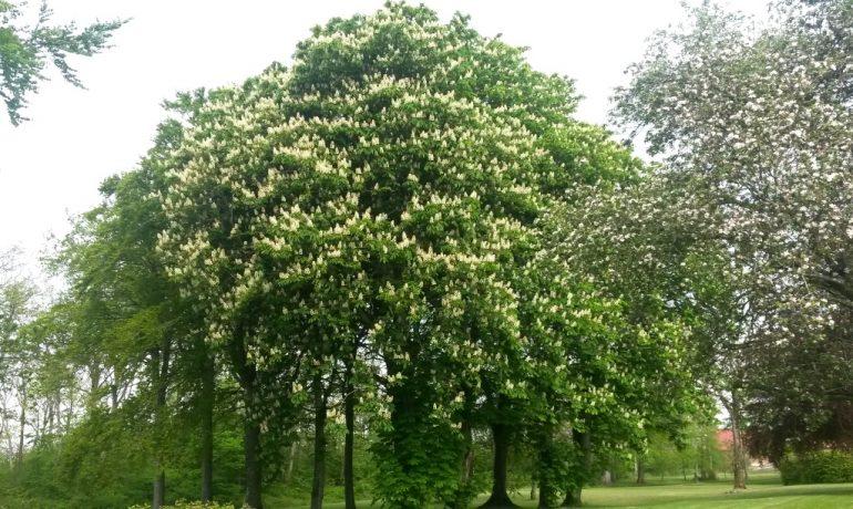 Træer i en park