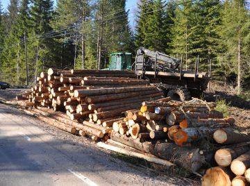 Er der nok bæredygtigt træ