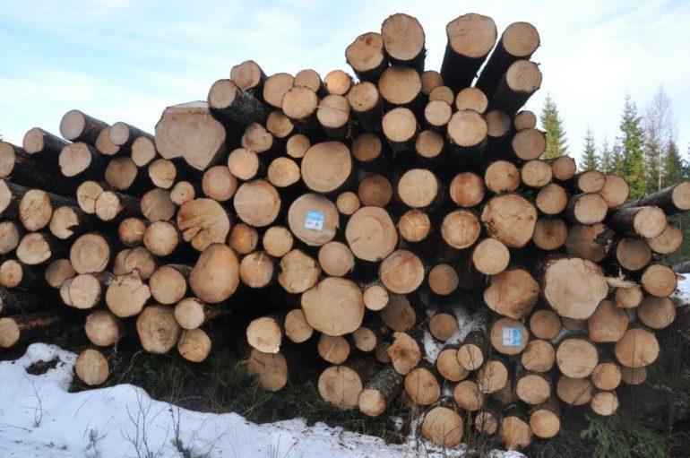 Kævler eller tømmer - grænsen er flydende for især nåletræ