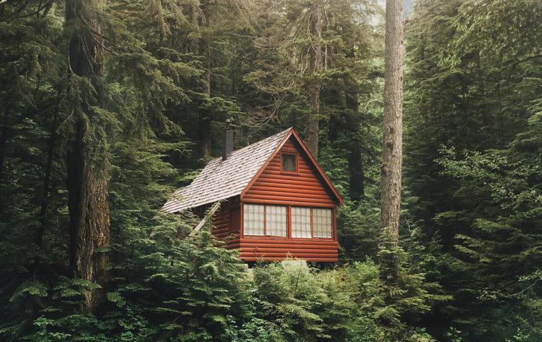 hytte i skoven