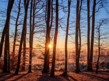 Seks skarpe om træ