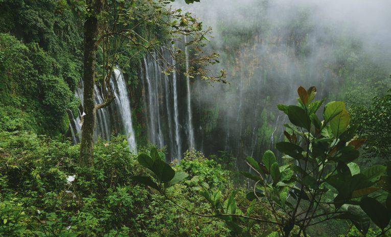 Tropisk træ
